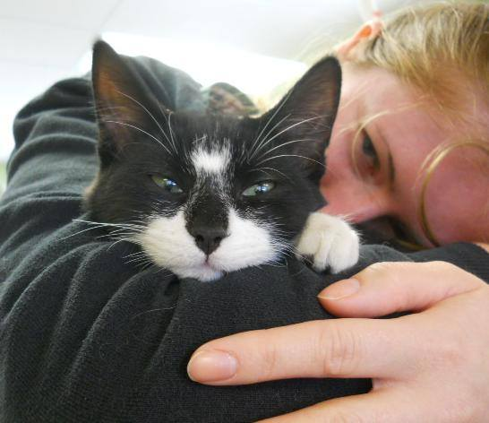 Brant Norfolk Veterinary Clinic